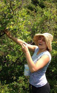 Blueberries: Stephanie eats as many blueberries as she picks.