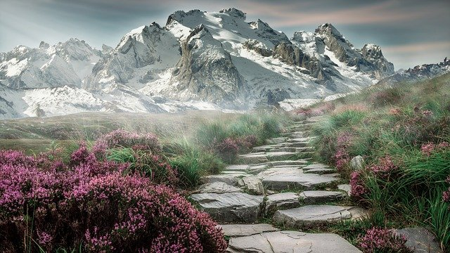 Path to a beautiful mountain lined with purple flowers