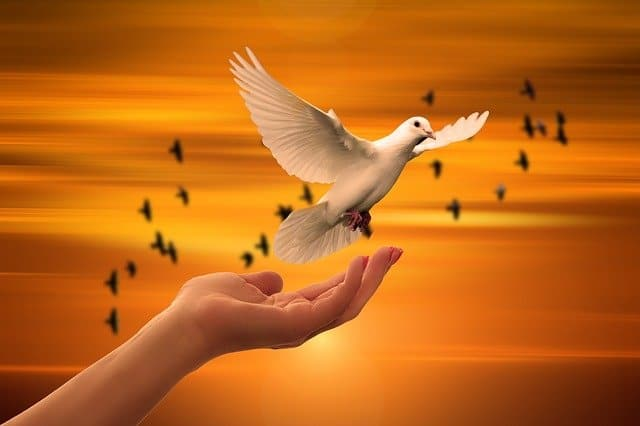 hand releasing dove