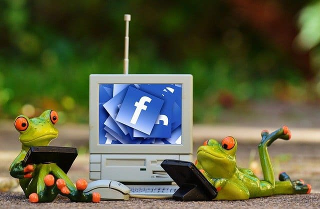 two frogs using facebook